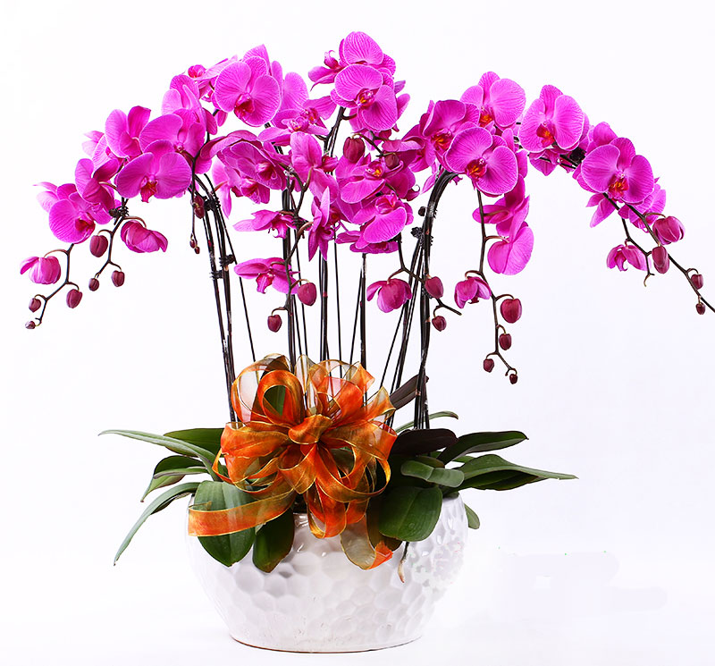 send flowers to nanning