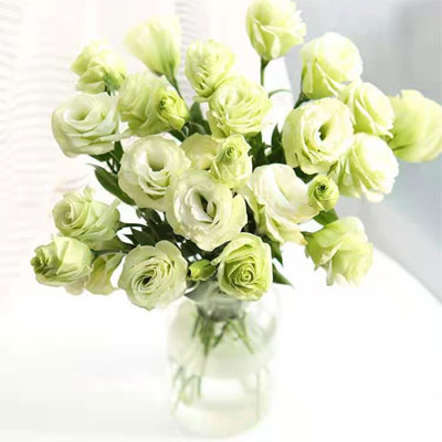 send green lisianthus to china